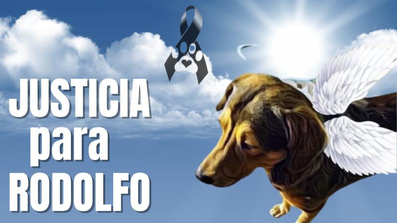 Justicia para Rodolfo: El perrito que murió de la manera más macabra