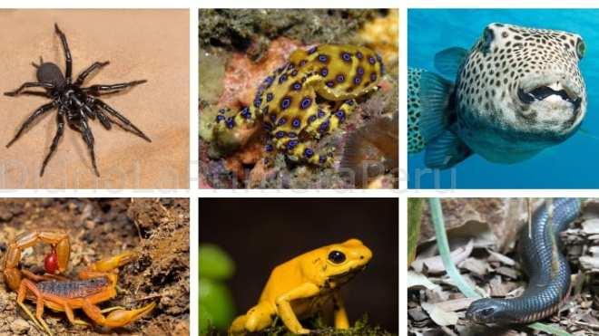 Top De Los Animales Más Venenosos Del Mundo