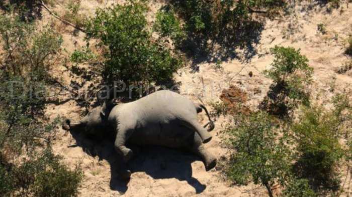 El Motivo De La Muerte De Cientos De Elefantes En Botsuana